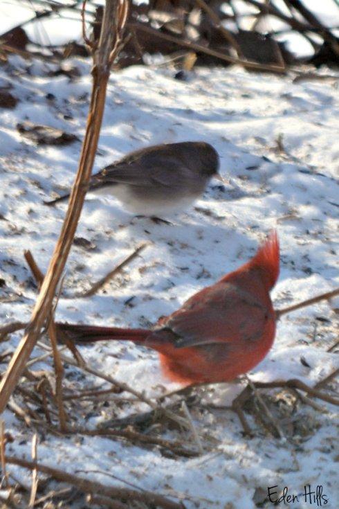 Birds_0374ews