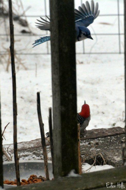birds_9980ews