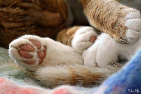 cat paws_9999ews