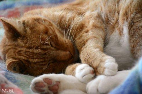 Cat_0002ews
