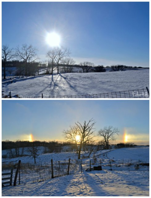 cold sun collage