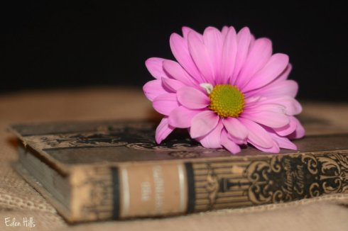 Daisy Book_9895ews