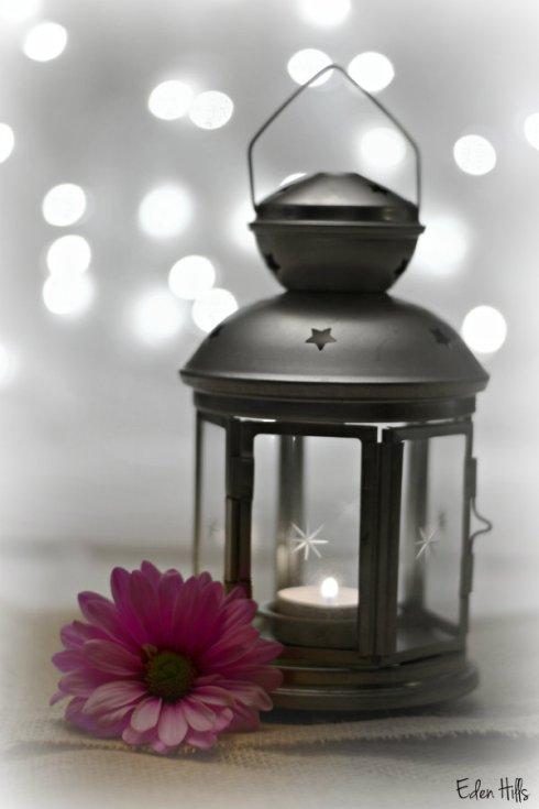 Daisy lamp_9930ews