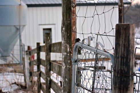 Fence_0696ews