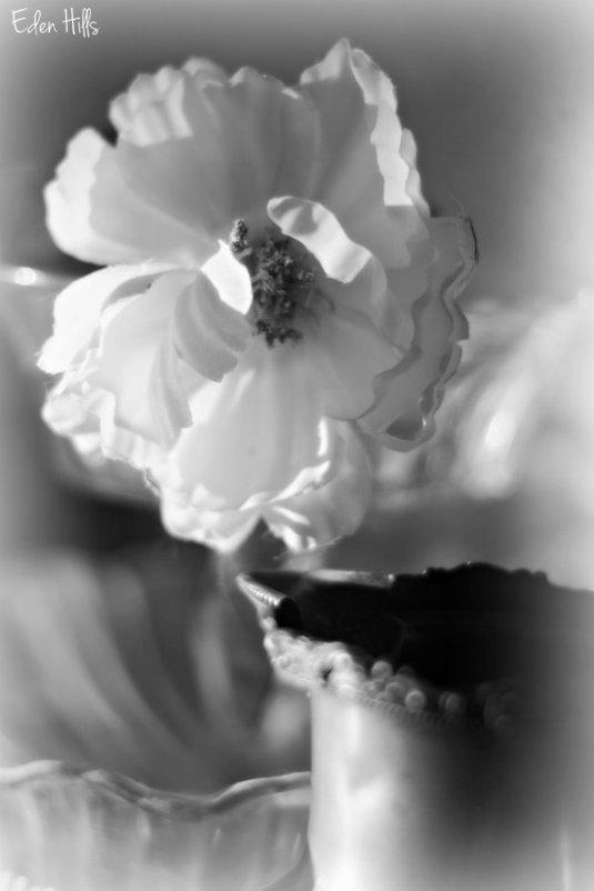 Flower PItcher_9760e2ws