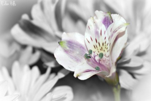 Flower_9937ews