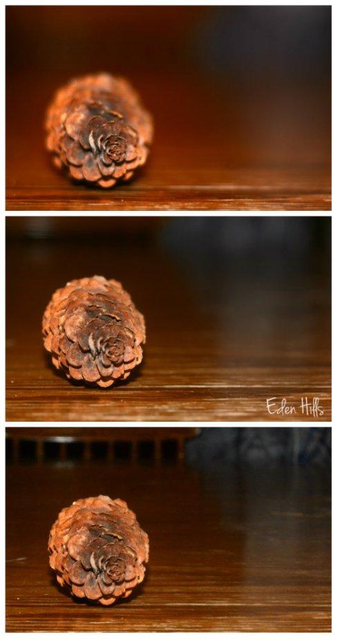 pine cone collage