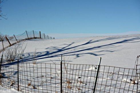 Fence Shadow_1369ews