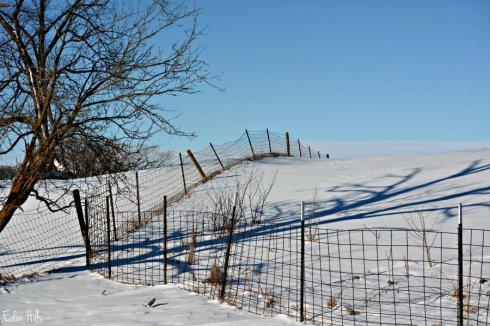 Fence Shadow_1371ews