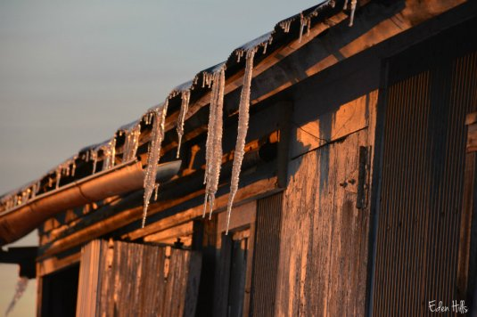 icicles_1038ews