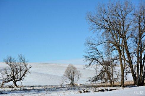 Pasture_1429ews