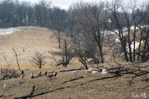 pasture_1847ews