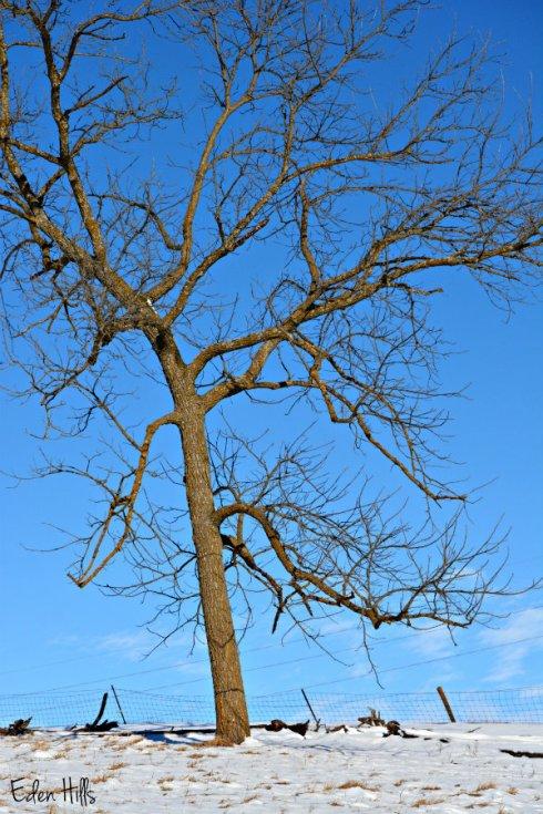 Tree_1503ews