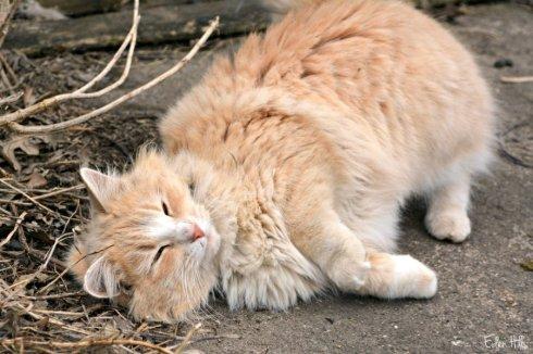 cat_2598ews