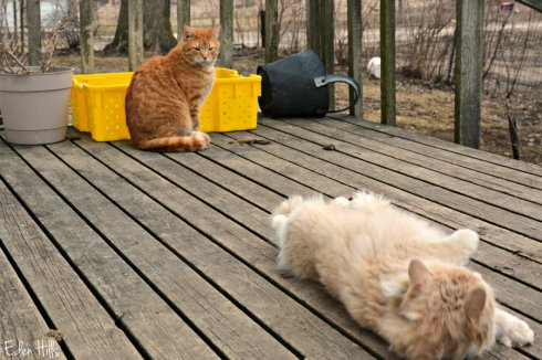 cats_2753ews