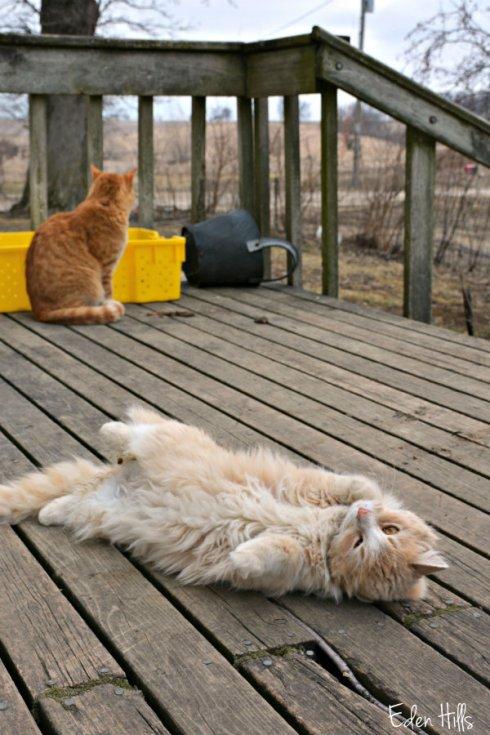 cats_2758ews