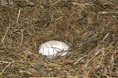 Egg_2886ews