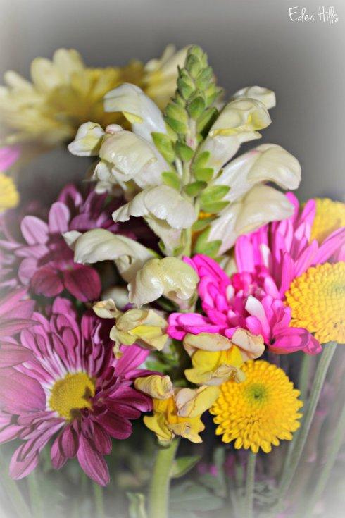 flowers_3847ews