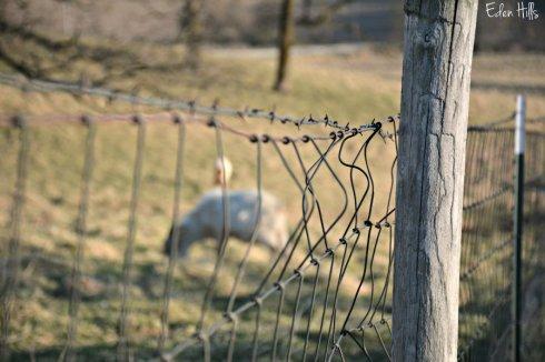 Fence_5097ews
