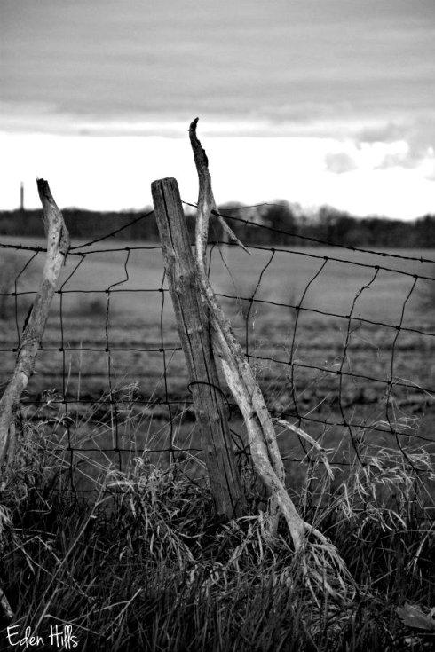 Fence_5539ews2
