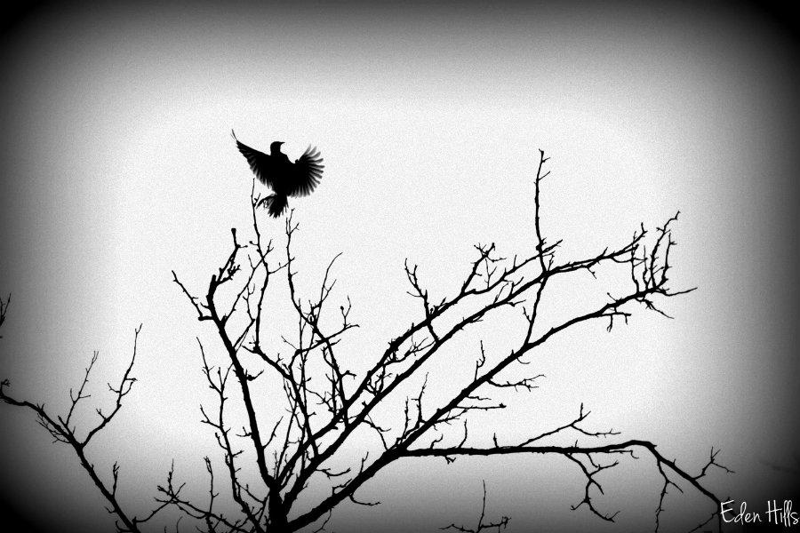 A bird walk eden hills for Eden hill walk in