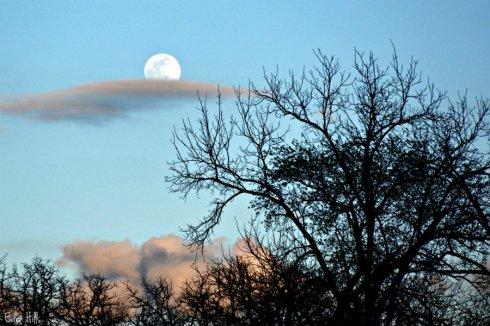 Moon Eden Hills