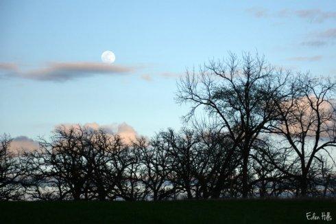 Moon_5531ews