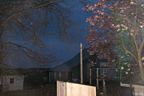 rainy barn_5266ews