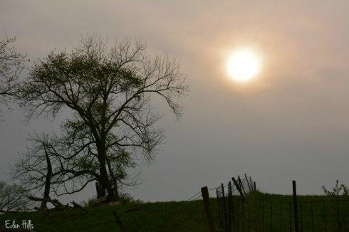 sunny skies_5828ews