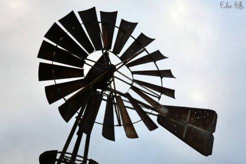 Windmill Q_5533ews