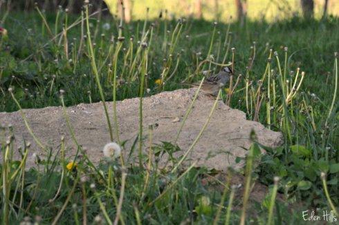 bird_6546ews