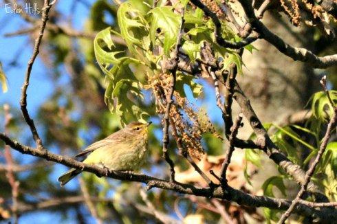 bird_6571ews
