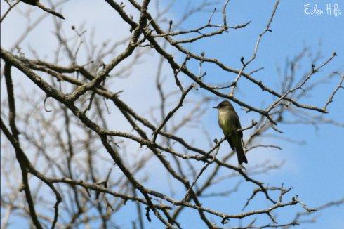 bird_6694ews
