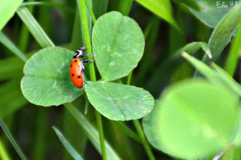 bug_6676ews