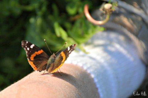 butterfly selfie_7250ews