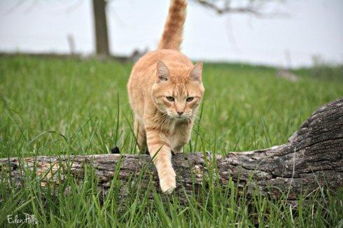 cat_6292ews