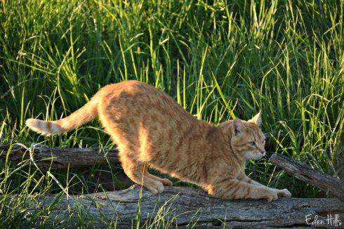 cat_6575ews