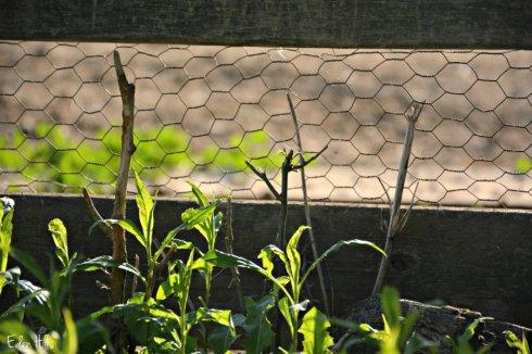 fence_6215ews