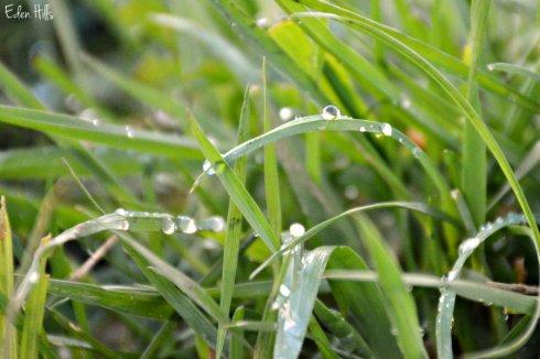 grass_6010ews