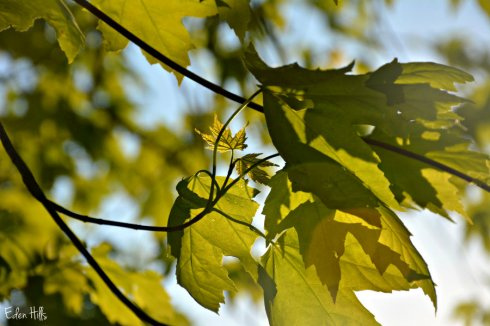 leaves_6210ews