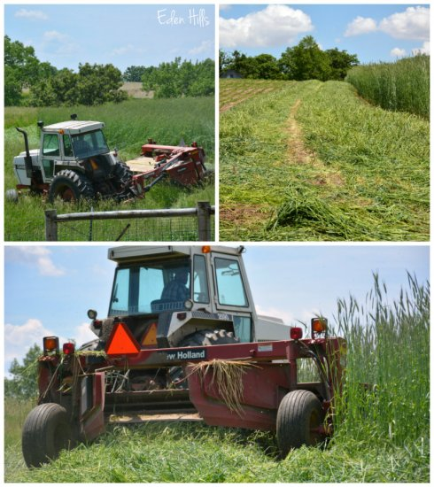mowing collage