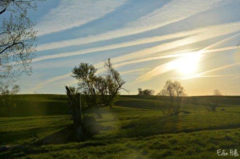 pasture_6105ews