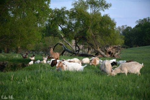 Pasture_6851ews