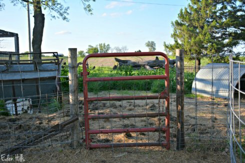 red gate_6403ews