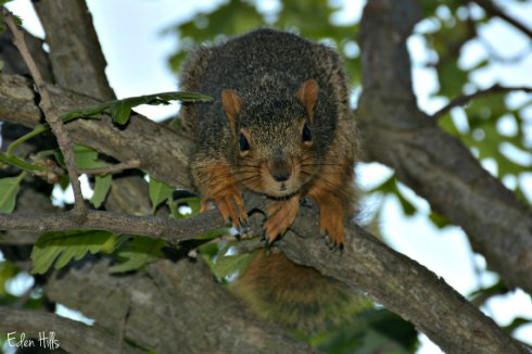 squirrel_7180ews