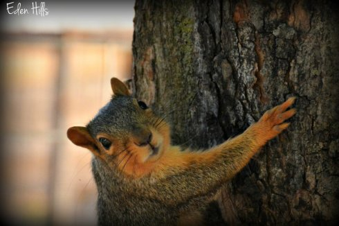 Squirrel_7337ews