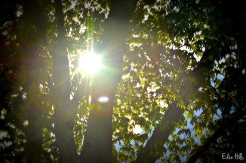 sunshine_5992ews