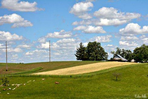 Farm_7934ews