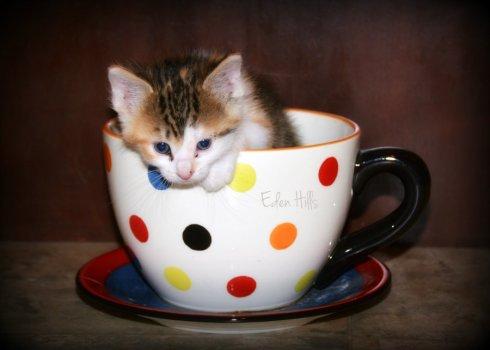 Kitten_8106e5x7ws