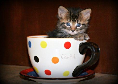 kitten_8137e5x7ws